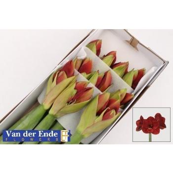 product/img.ozexport.nl/LHIPFER-LIVE_fotos-0x681C7D366EB8402971E4091B0785CF82341136D4.jpg