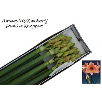 product/img.ozexport.nl/LHIPRIL-LIVE_fotos-0x45F4C38FEF0A8B58508C0F6F906062812391F25F.jpg