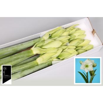 product/img.ozexport.nl/LHIPWHISEN-LIVE_fotos-0xA2D7A5D947FDCD287066867C38B27C5DBE5B3532.jpg