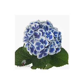 product/img.ozexport.nl/LHORBEAD5-ART_fotos-VBN110000-vbn115460.jpg