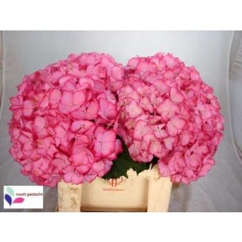 product/img.ozexport.nl/LHORMAGO4-LIVE_fotos-0xCBC502084883C05987C80397889820CC72B6A058.jpg