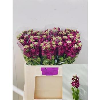 product/img.ozexport.nl/LLEVAIDP-LIVE_fotos-0x06EE96DB2C36AF567437AD16B91EE420481558FD.jpg