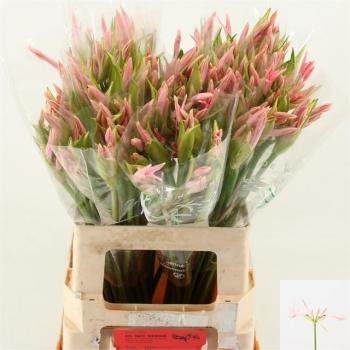 product/img.ozexport.nl/LNER65SOF-LIVE_fotos-0x90D9DAE9716224936DFECD1F9F4A9792929ADE18.jpg
