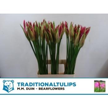 product/img.ozexport.nl/LNERFAV7-LIVE_fotos-0x9E28742EA9C3304D7E419383BCB1338C338276DA.jpg