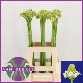 product/img.ozexport.nl/LORNS7-LIVE_fotos-0x968549A745D899E733E1787057F0EB0A0658FDDA.jpg
