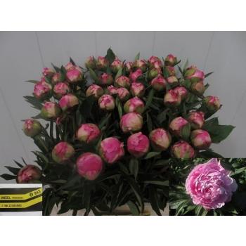 product/img.ozexport.nl/LPOJDRALF6-LIVE_fotos-0x3DBE783F3FB616401568F4FA88392592E56BD556.jpg