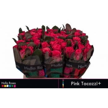 product/img.ozexport.nl/LRPIN4-LIVE_fotos-0x4845EB5E366973A8C70E3554570BCD91C772682F.jpg