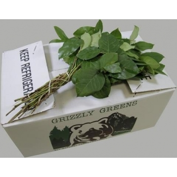product/img.ozexport.nl/LSAL-ASSORTI_fotos-gcon-GCON Blad salal tips Grizzly Greens.JPG