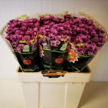 product/img.ozexport.nl/LSANKRI-LIVE_fotos-0x30AE7569D1A979C40E72DB99929E9407B2055850.jpg