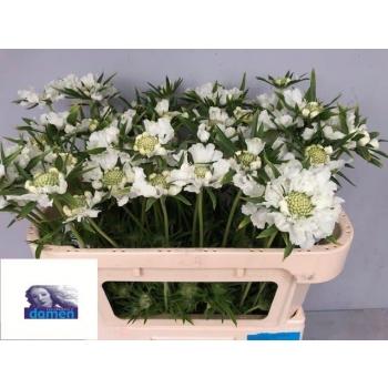 product/img.ozexport.nl/LSCAANN6-LIVE_fotos-0x58E76268FEB758ECCC2F626428D20DDF623456FD.jpg