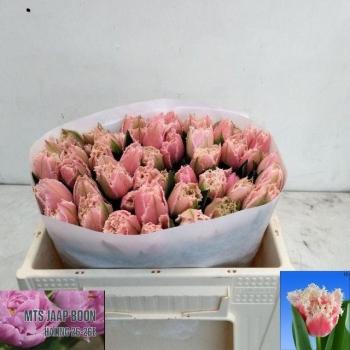 product/img.ozexport.nl/LTULQUE-LIVE_fotos-0xCDEF29F3347DF5F9D357A45D6E337376D73507C5.jpg