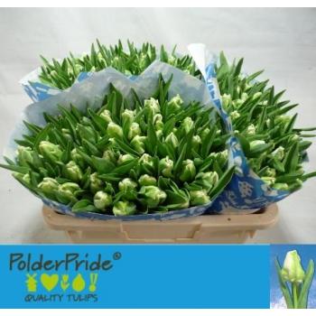 product/img.ozexport.nl/LTULSUPP-LIVE_fotos-0xC52F429496A0B4565E3888987C8195E77A04EBE3.jpg