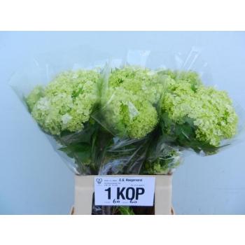 product/img.ozexport.nl/LVIB6ROS2-LIVE_fotos-0xB692A1D529660A3C178EE58CEEB976646DE47889.jpg