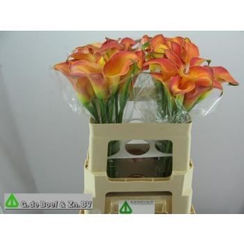product/img.ozexport.nl/LZANMORS55-LIVE_fotos-0xB4E884ED600FEEB540FA44CE1D20D392D959E25F.jpg