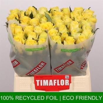 product/img.ozexport.nl/RGOO4-LIVE_fotos-0x7CA0432A36C93FF6AEFD283A50E28C6ABA99F58E.jpg
