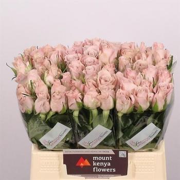 product/img.ozexport.nl/RMENT4-LIVE_fotos-0x35977790720EE236E9798FE84DA2EFD4F7126B1D.jpg