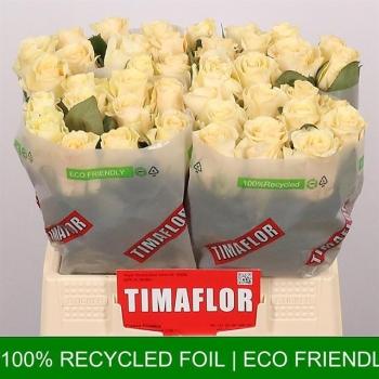 product/img.ozexport.nl/RPEART4-LIVE_fotos-0x6476185F6D7A1F1A99950569EB4C00A903D14F4A.jpg