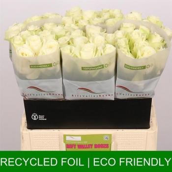 product/img.ozexport.nl/RSNO6-LIVE_fotos-0x6A38E90381B50B0478864CC917A79B77C46E27FA.jpg