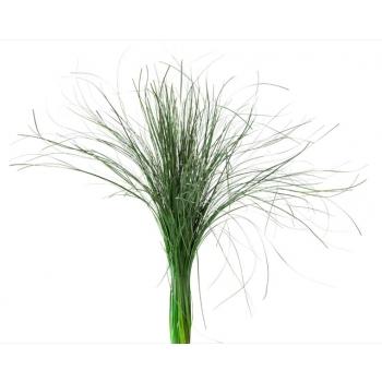 BEA0105-2-bear-grass.jpg