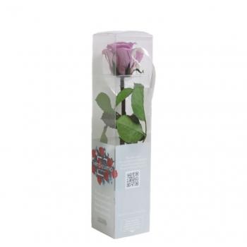 PRZ2830-05-rosa-tallo-mini.jpg
