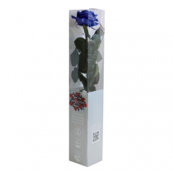 PRZ7630-05-rosa-tallo-premium.jpg