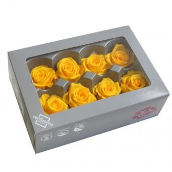 RME3340-03-rosa-medium.jpg