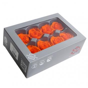 RME3530-03-rosa-medium.jpg