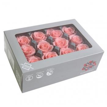 RSM1451-03-rosa-mini.jpg