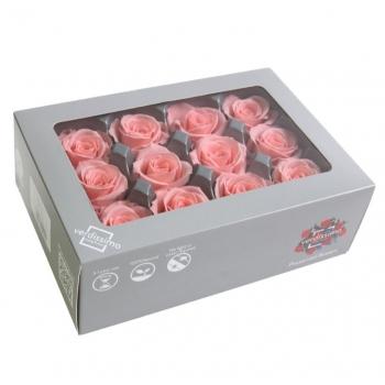RSM1471-03-rosa-mini.jpg