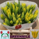 Tulp Green Mile