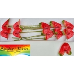 Anthurium Flamingolill Mars Improved*10