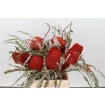 Banksia red 40cm