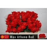 Roos 50cm Wax Red