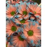 Chrysanthemum Krüsanteem Kennedy Bazooka