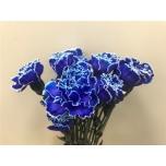 Dianthus Carnation Nelk värvitud Blue
