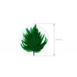 Stabiliseeritud Fougere Plume Vert 1 Pakk