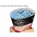 Ranunculus Tulikas Marshmallow Blue