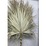 Dried Palm Big 160cm