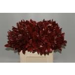 Ruscus 60cm värvitud punane tk