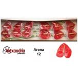 Anthurium Flamingolill Arena*12