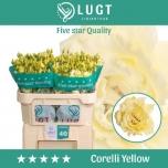 Lisianthus Preeriakell do corelli yellow