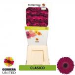 Gerbera Clasico*15