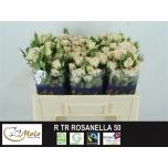 Kobarroos 50cm Rosanella