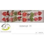 Anthurium Flamingolill mix*12