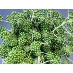 Aralia Berries 55cm
