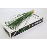 Beargrass Karuhein