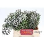 Brunia Silver 40cm