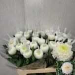 Chrysanthemum Krüsanteem Palisade