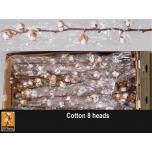 Cotton Gossypium Puuvilla oks