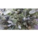 Eucalypt 50 cm mix